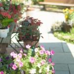 独立開業して花屋をやりたい!成功の秘訣とは?